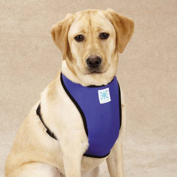 Cool Pup Harness by Guardian Gear