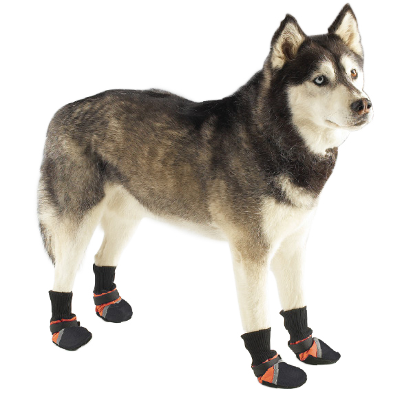 Dog wearing our Guardian Gear Boots